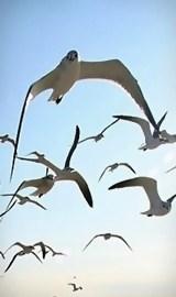 birds in the skies i