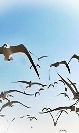 birds in the skies ii